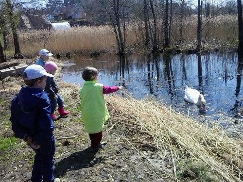 лебеди, весна, дача, шашлыки